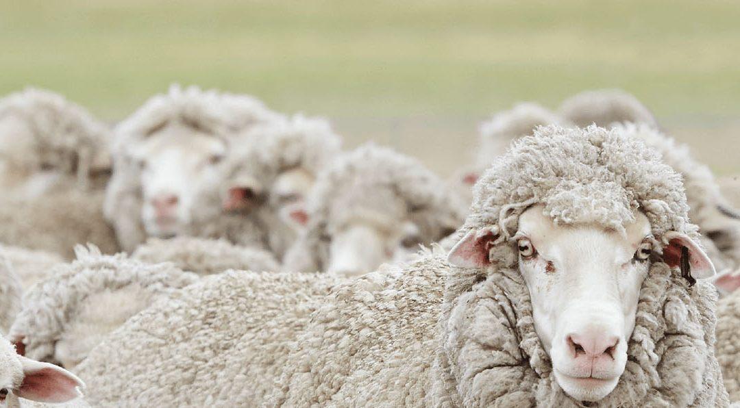 Australian Wool Innovation Limited